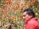 Conoce un poco quién es el poeta Pedro Uc Be, el Siipkuuts de los montes mayas