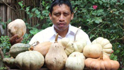 Contra el nuevo colonialismo, semillas criollas