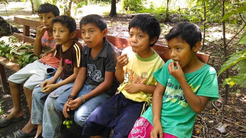 """Niños mayas de Xkerol comen """"mamoncillos"""" mientras esperan el momento de su actuación como sapitos"""