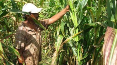 En manos de especuladores de tierras en Holbox