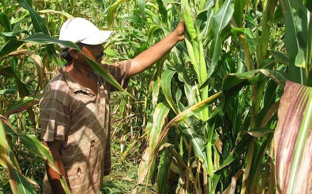 Casimiro Pinzón, agricultor de Xoy, comisaría de Peto
