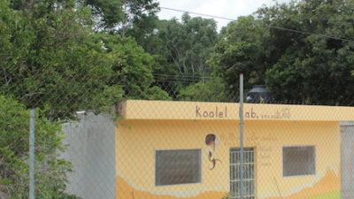Sagarpa también fracasa en Yucatán: un juez frena un permiso a Monsanto