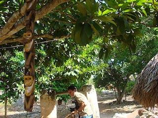 Foto elChilamBalam / Monitos colgados de uno al otro