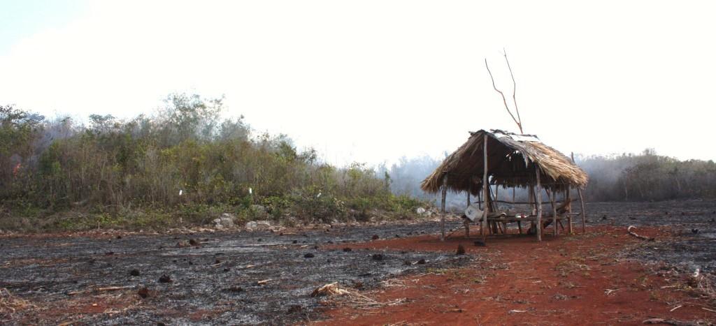Quemas en las milpas mayas del sur de Yucatán